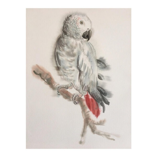 African Grey Parrott - Watercolour